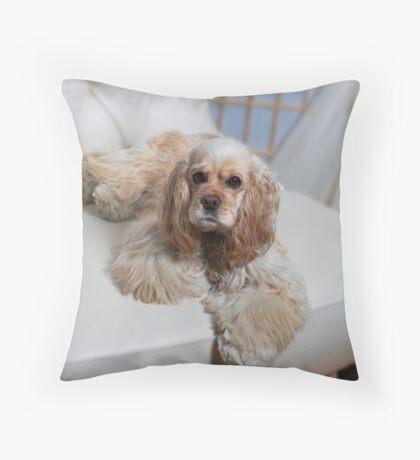 Tollie the cocker spaniel Throw Pillow