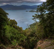 Landslide - Marlborough Sounds by Paul Duckett
