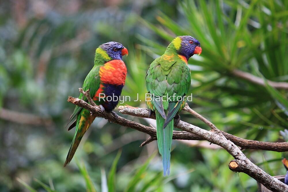 Birds: Mates In The Rainforest by aussiebushstick