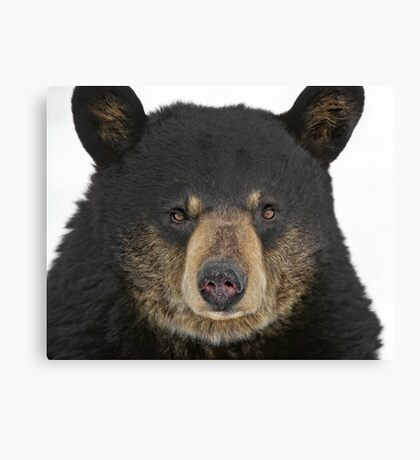 Bear and Grin it Canvas Print