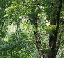 Rainforest in Tallebudgera Valley by aussiebushstick