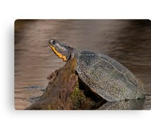 Blanding's turtle Canvas Print