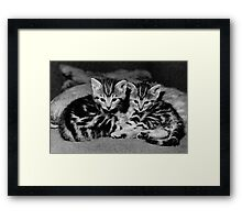 A beautiful pair of tabby kittens  Framed Print