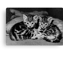 A beautiful pair of tabby kittens  Canvas Print
