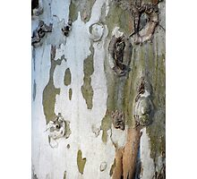 Sycamore bark Photographic Print