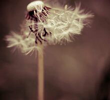 Sweet  by Nina  Matthews Photography