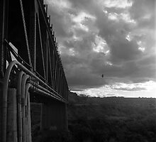 Bridge and Bird by James2001