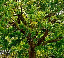 Big Beautiful Treeee by Nina  Matthews Photography