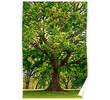 Big Beautiful Treeee Poster