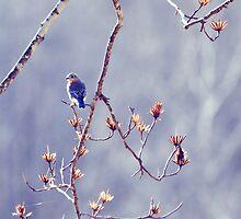 Bluebird for Isabelle by TraceyTilsonArt