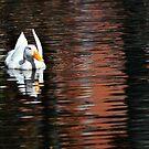 Duck by Loreto Bautista Jr.