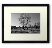Lonely tree in Berlin, Wisconsin Framed Print
