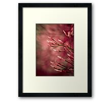 Dashing  Framed Print
