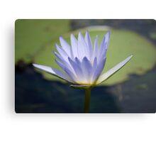 Waterlily Metal Print