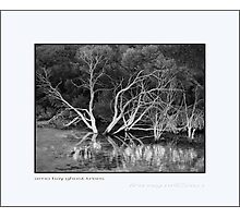 Arno Bay Ghost Trees Photographic Print