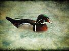 Carolina Duck by Carol Bleasdale