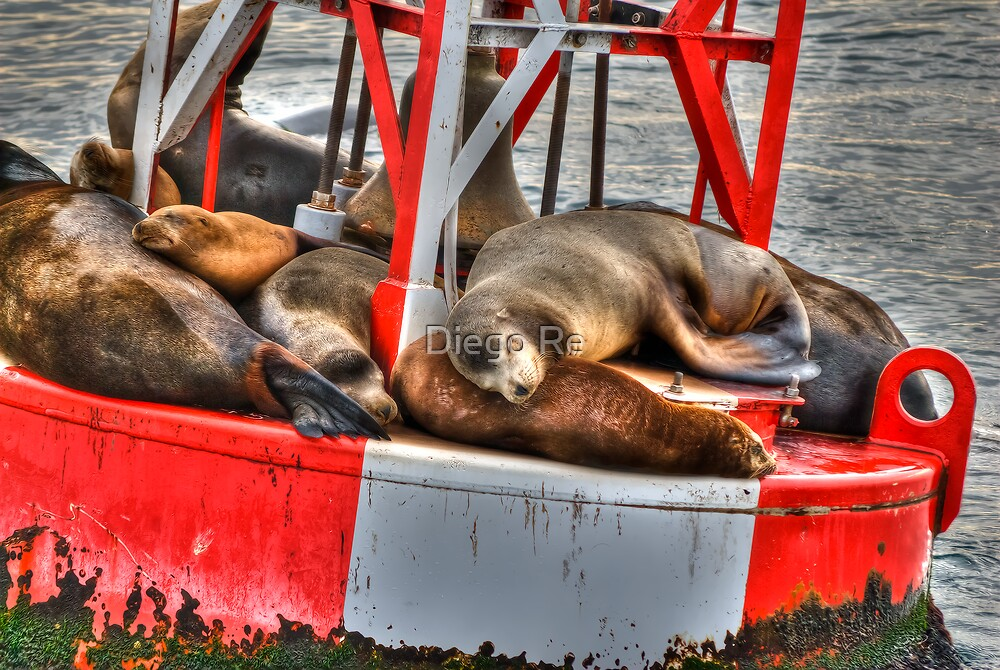 Floating And Napping by Agro Films