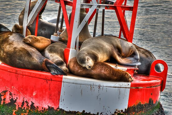 Floating And Napping by Diego  Re