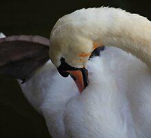 Swan Feathers by John Dalkin