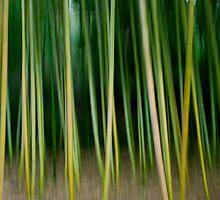 bamboo swipe by nicholas provost