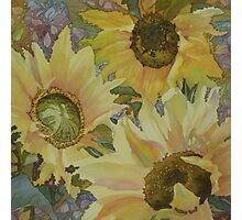 Sunflowers in the Afternoon Photographic Print