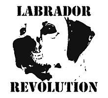 Labrador Revolution Photographic Print