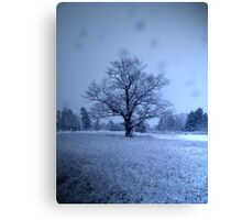 In Snowy Seclusion Canvas Print