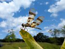 Enjoying the Breeze - Dragonfly by Barberelli
