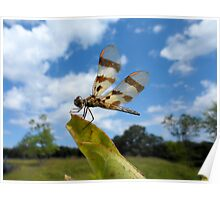 Enjoying the Breeze - Dragonfly Poster