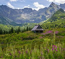 Sunny Day In The Tatra Mountains by PatiDesigns