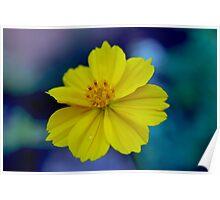 Flower yelow Poster