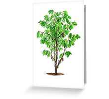 Cacao Tree (Theobroma cacao) Greeting Card