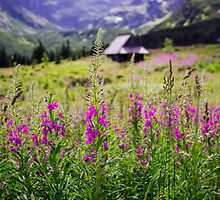 Fireweed In The Mountains by PatiDesigns