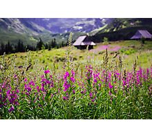 Fireweed In The Mountains Photographic Print