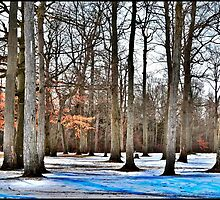 Trees In The Park by MissDawnM