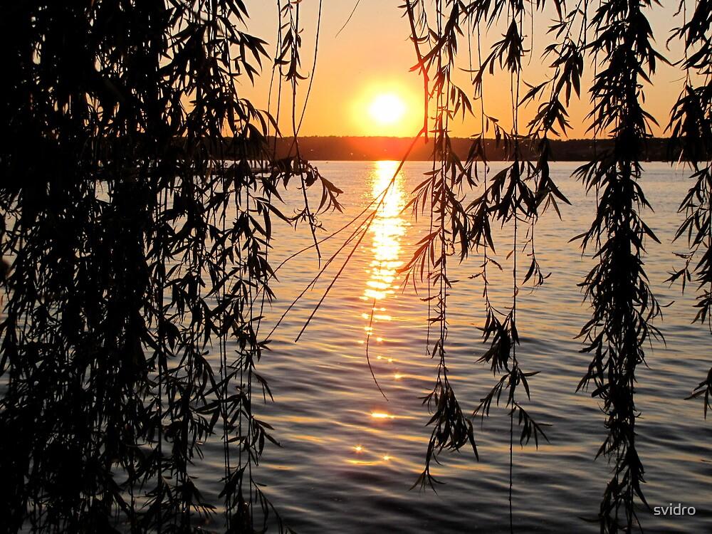 Willow sunset by svidro