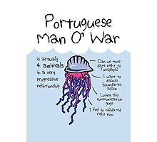 Portuguese Man O' War Is Actually 4 Animals In A Very Progressive Relationship Photographic Print