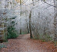 Winter Woodland Wonder by jaconm