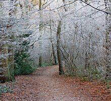 Winter Woodland Wonder by jaconm