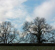 Winter Scenery by jaconm