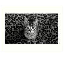 Curious Kitten B&W Art Print