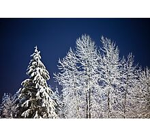 Winter Nightscape Photographic Print