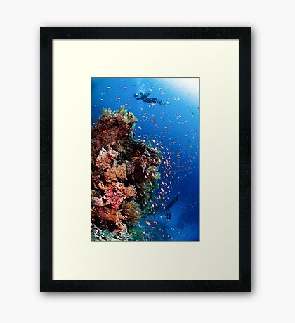 Scuba Divers pass by a coral reef photographed at Ras Mohammed  Framed Print