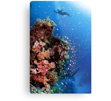 Scuba Divers pass by a coral reef photographed at Ras Mohammed  Metal Print