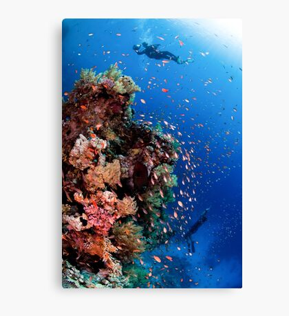 Scuba Divers pass by a coral reef photographed at Ras Mohammed  Canvas Print