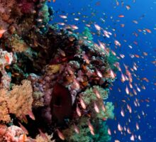 Scuba Divers pass by a coral reef photographed at Ras Mohammed  Sticker