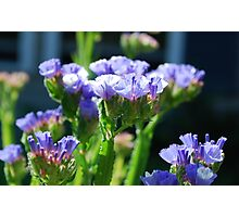 Blue Crinkly Mystery Flowers Photographic Print