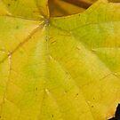 Big Leaf by WildestArt