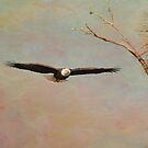 Eagle Soft Glide by Deborah  Benoit