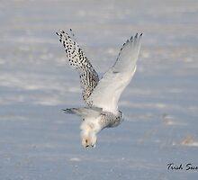 Snowy Owl Taking Off by Trish Sweett